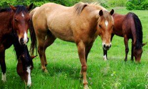 horses_201093